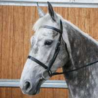 Requisite Snaffle Bridle With Reins Black За коня