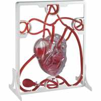 Outdoor Equipment Sports Directory Pumping Heart Model  Часовници