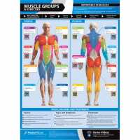 Outdoor Equipment Sports Directory Muscle Groups & Exercises  Часовници